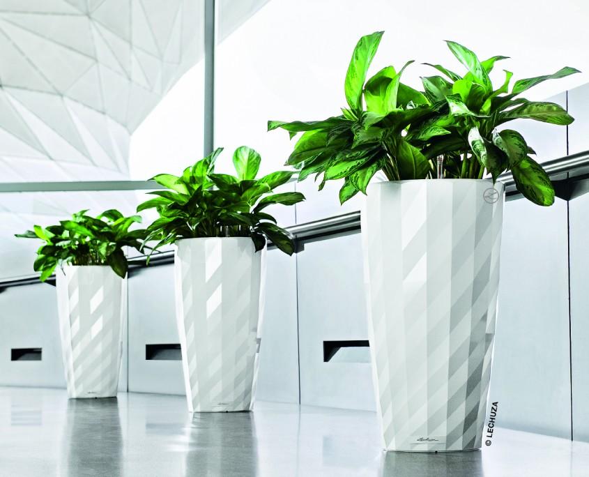 Service hydro easy einfach sch ne pflanzen mieten for Raumgestaltung pflanzen
